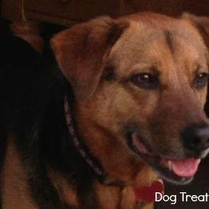Peanut Butter Dog Biscuit Recipe with Oatmeal is Simple