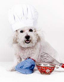 Poodle in a hat cooking