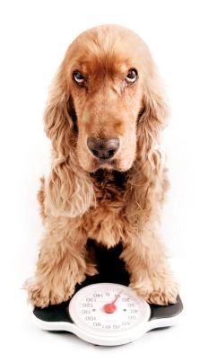 Common Dog Treat Calories