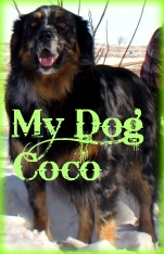Coco is a 4 yr old Australian Shepard, Coonhound, Blue Healer mix. She can sit, wave, heard cattle, shake, roll over, jump and speak.