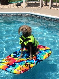 Gizmo in the pool
