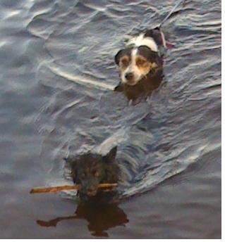 Zarra & Lucky swimming in summer