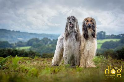 Fine Art Dog Portraits - Hound Dog Photography