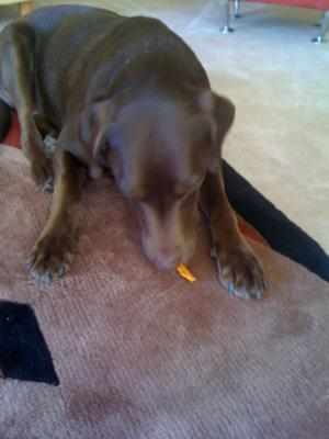 My dog eating it.