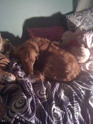 Cedar snoozzin away on my bed