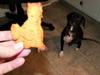 Buddy getting his kitty cookie