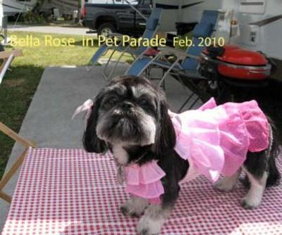 Bella Rose at Pet Parade