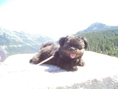 Kiddo at Mt Rainier, WA