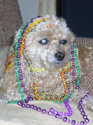 My little Mardi Gras Princess