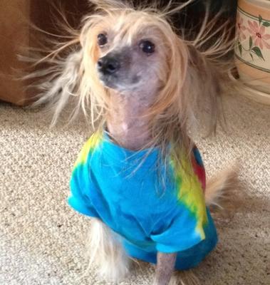 Bad hair day!