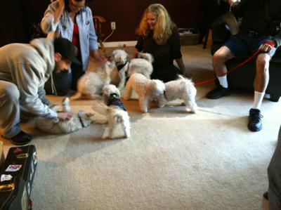Many fluffy pups at the birthday party
