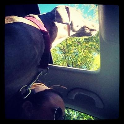 Sunroof's Are Made For Harper