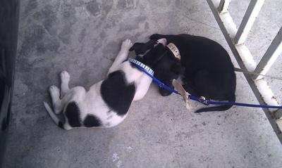 Puppy nap with his Bro!
