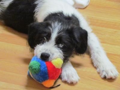 Lolo with one of his favorite squeaky toys
