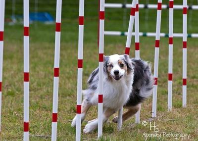 Caper, doing agility weaves